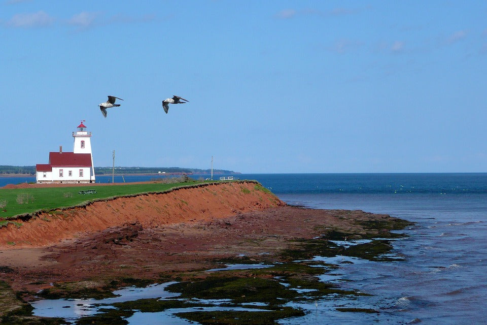 A lighthouse stands on the shore of Prince Edward Island with two gulls flying in the sky.
