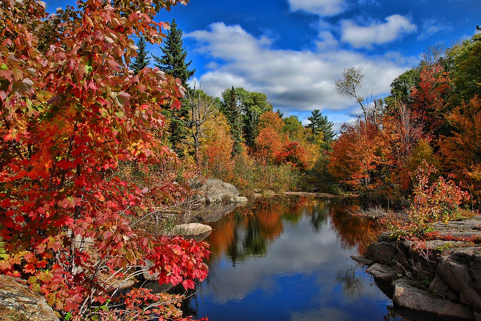 A riverside in New Brunswick, seen in autumn.