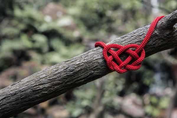 Red rope tied in a knot on a tree branch.