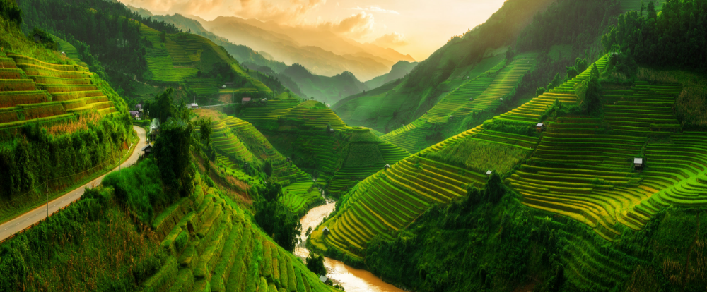 Vietnam view of rice fields