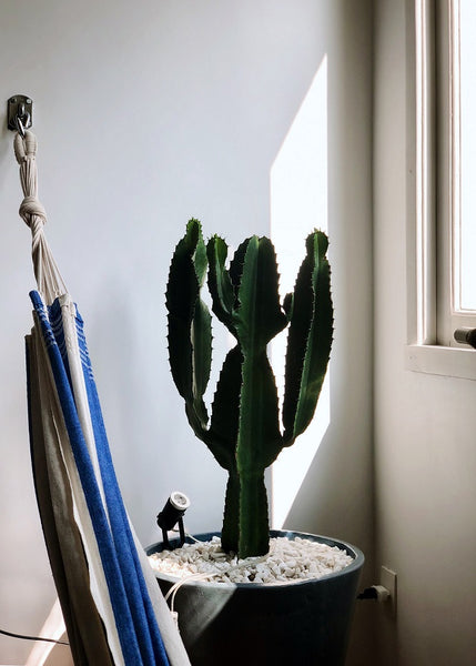 Hammock hanging on the wall safely secured in using metal suspension hardware pictured next to a cactus.