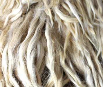 Cream Alpaca Locks, Raw Suri