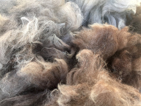 Raw Rose Grey Alpaca Fleece, 4 oz Bags