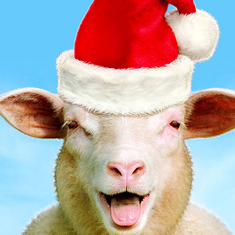 Santa Sheep Visits Mondaes (and takes great selfies too!) Nov. 25, 4-8pm during the Downtown Nampa Christmas Tree Lighting