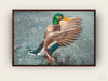 "Framed Canvas Print ""The Mallard in Snow"""