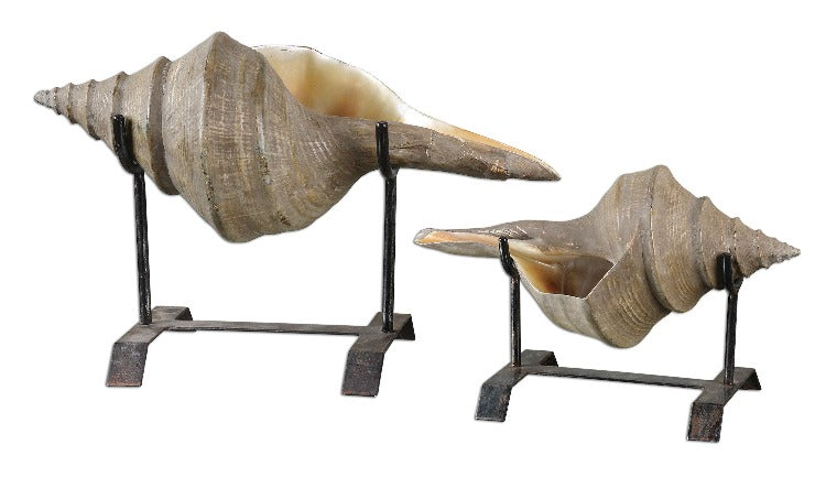 Conch Shell Sculpture, Set/2 - taylor ray decor