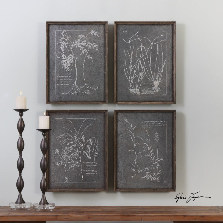 Root Study Print Art S/4 - taylor ray decor