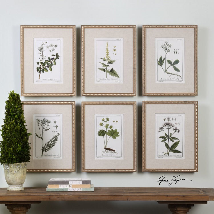 Green Floral Botanical Study Prints S/6 - taylor ray decor
