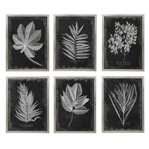 Foliage Framed Prints, S/6 - taylor ray decor