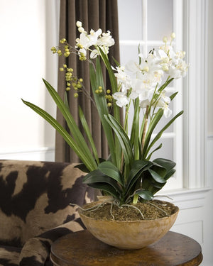 Moth Orchid Planter - taylor ray decor