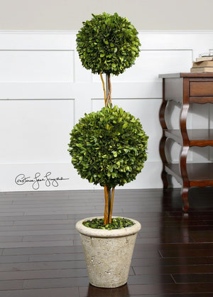 Preserved Boxwood Two Sphere Topiary - taylor ray decor