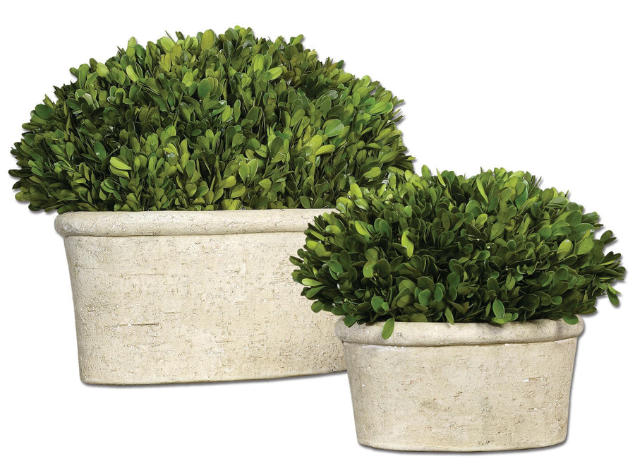 Oval Domes Preserved Boxwood Set/2 - taylor ray decor