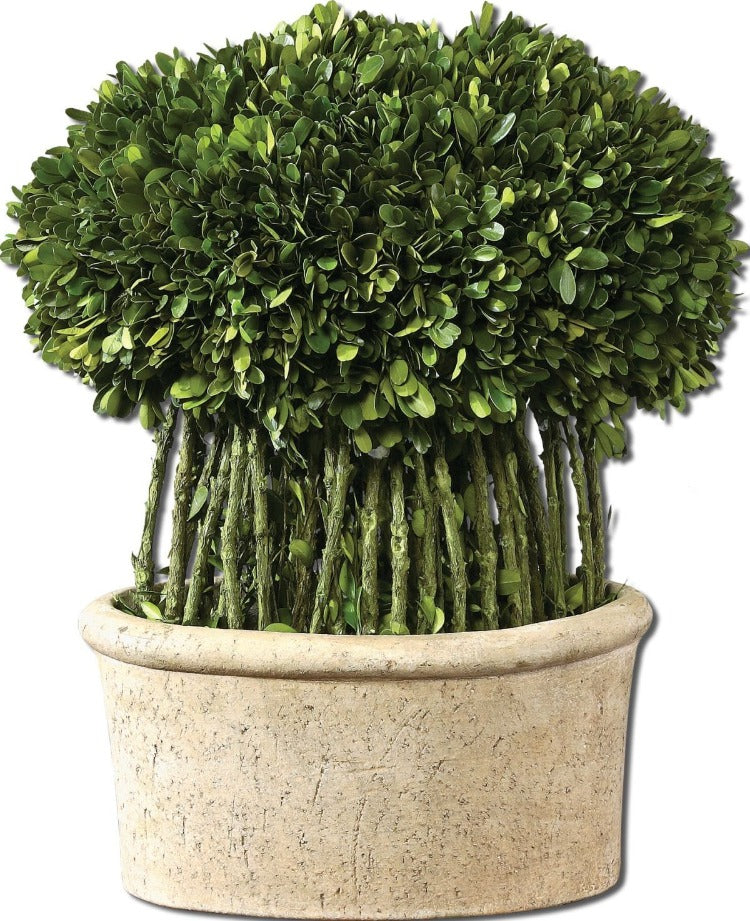Preserved Boxwood Willow Topiary - taylor ray decor