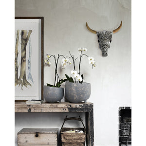 Oceane Cattle Skull Wall Art - taylor ray decor