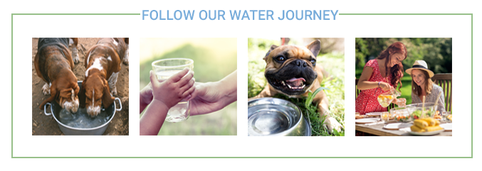 Follow Our Water Journey