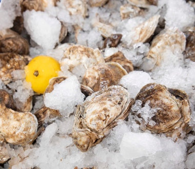 Shucked oysters on ice.