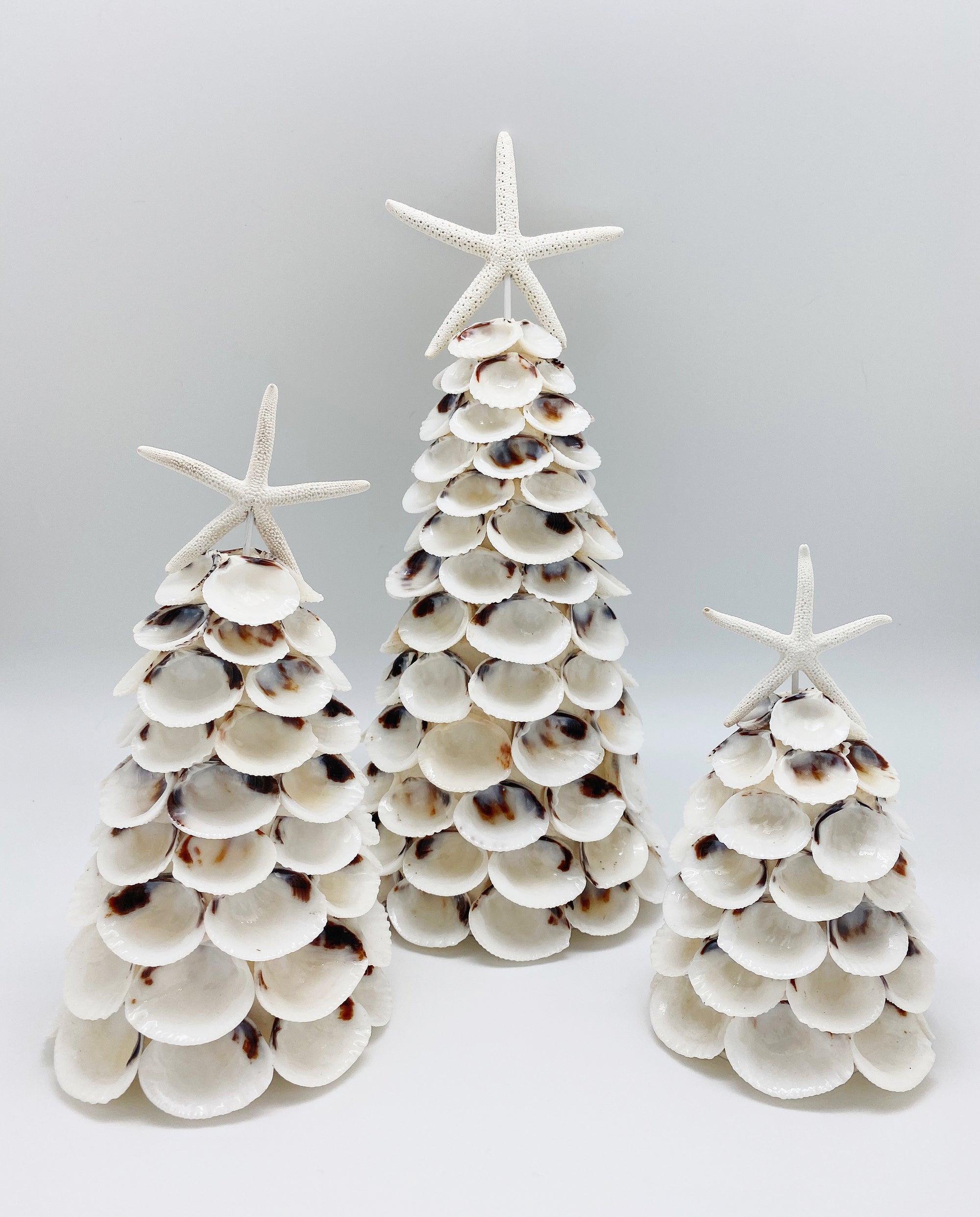 White Clam Seashell Tree
