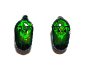 Green Beetle earrings with sterling silver ear posts