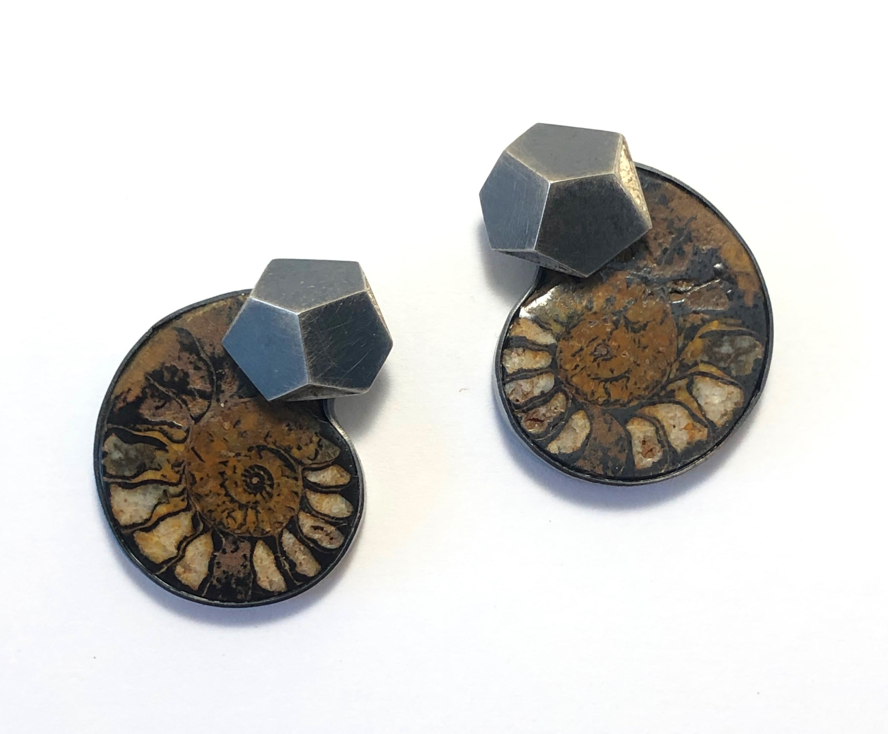 Ammonite with Hex Tops