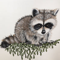 Woodland Raccoon