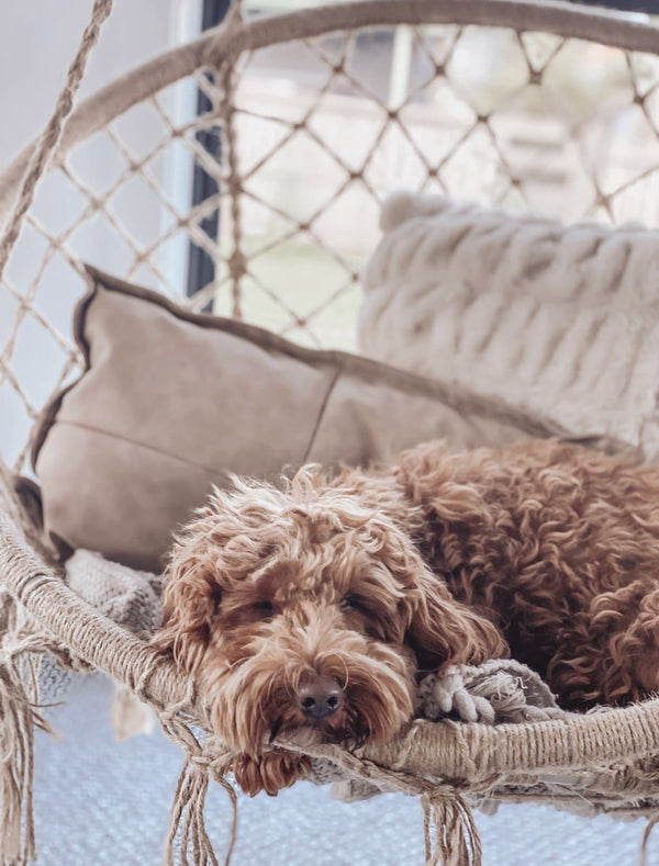 gorgeous puppy relaxing on an Ivory and Deene hammock chair