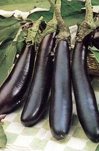 Long Purple Eggplant x 2