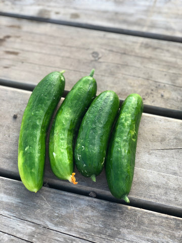 Lebanese Cucumber - Bunch of 2