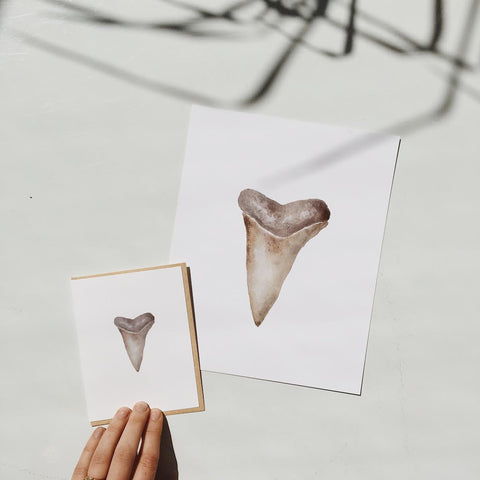 Shark Tooth Navy 8x10 Print