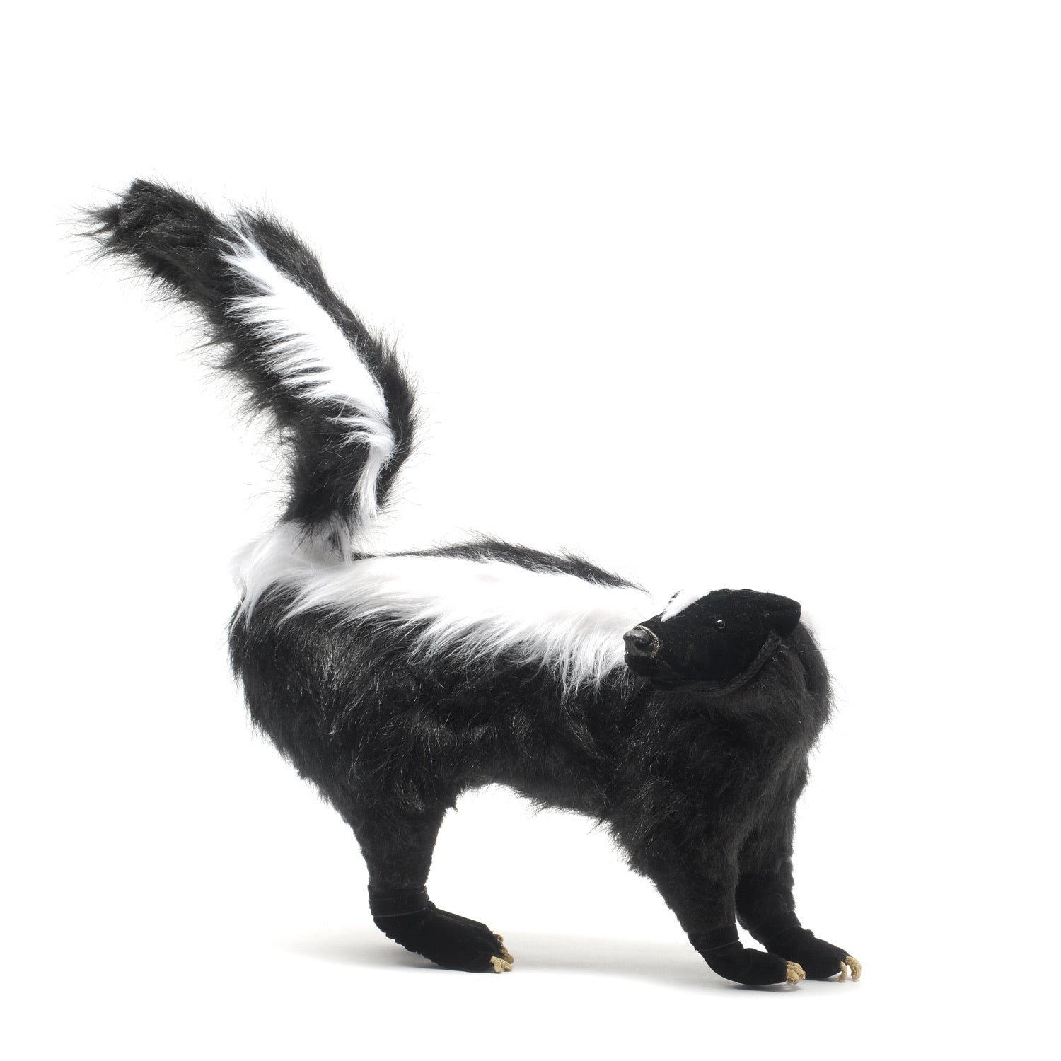 Skunk (Mephitidae) *SOLD*