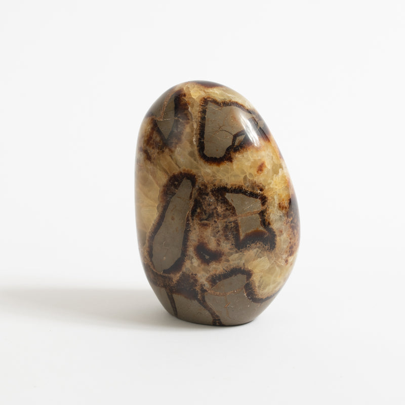 Polished Septarian Stone