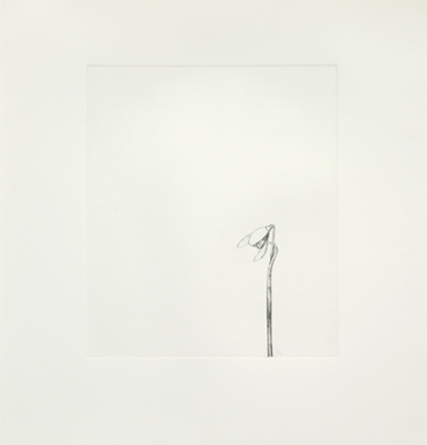 William McKeown, Snowdrop, 2008