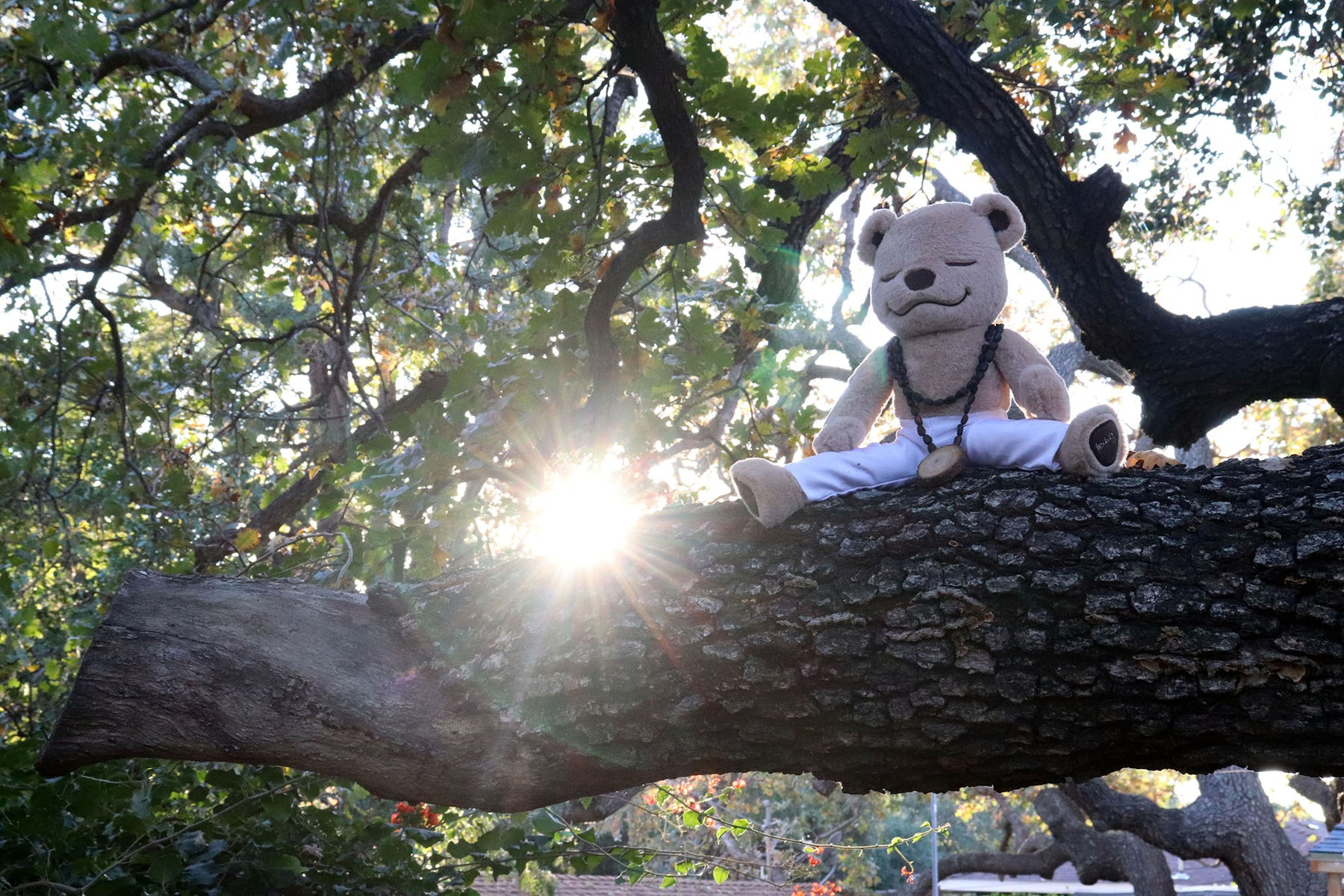 Meddy Teddy Meditation Tree