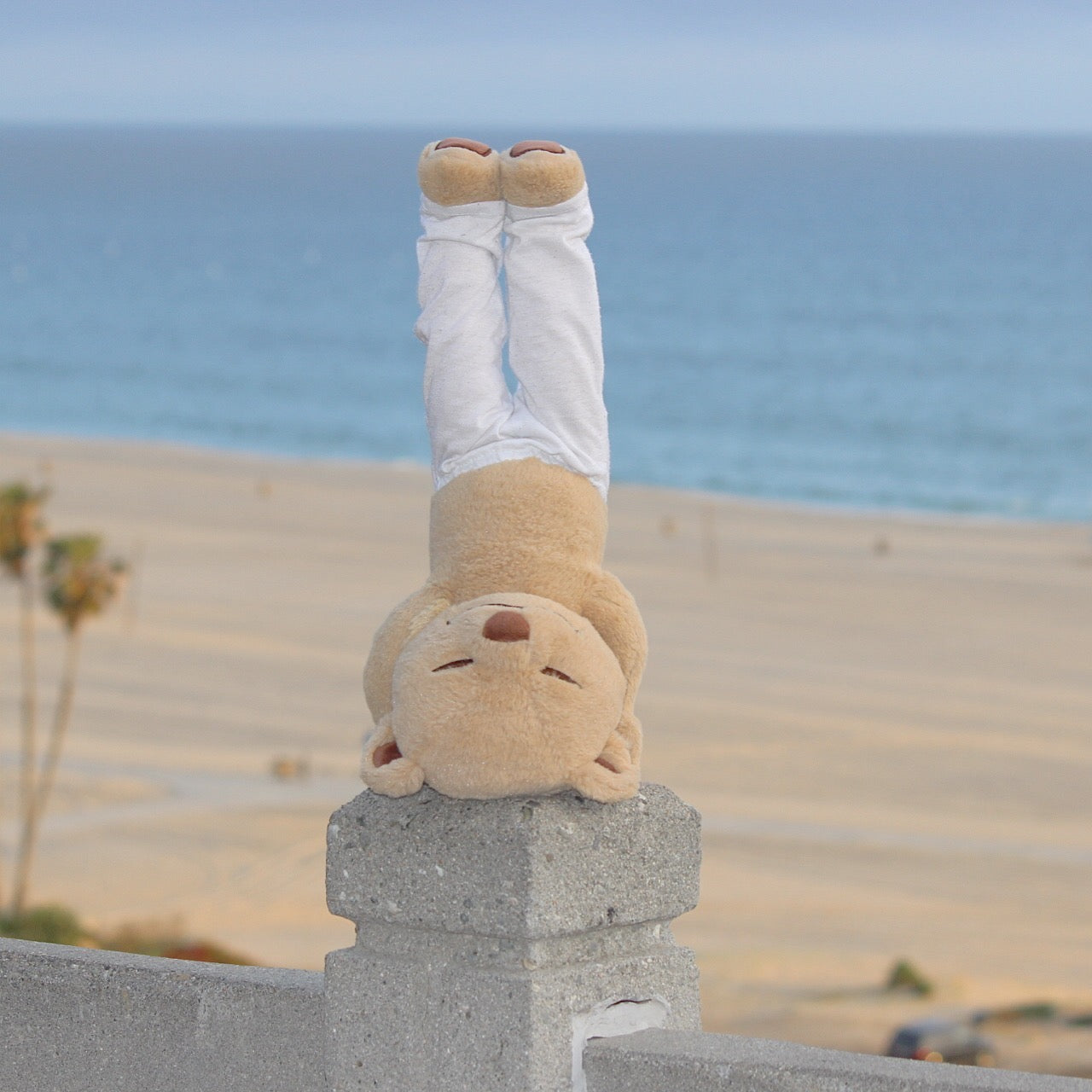 Headstand Pose Meddy Teddy at the Beach