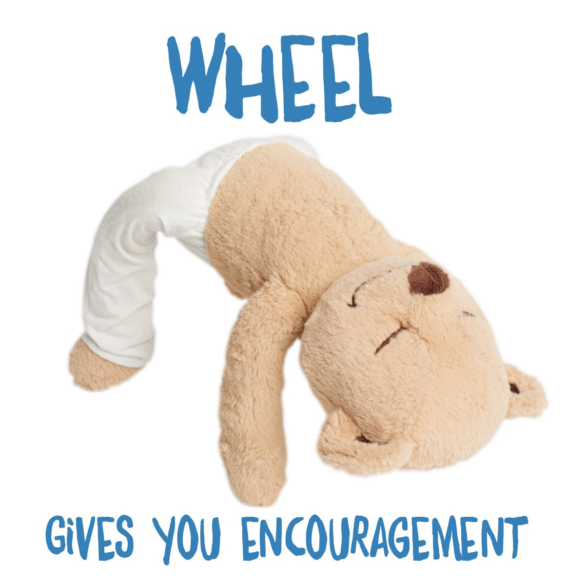 Wheel Pose Meddy Teddy