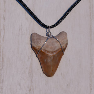 Red Clay Megalodon Necklace