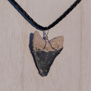 Dark Grey Megalodon Necklace