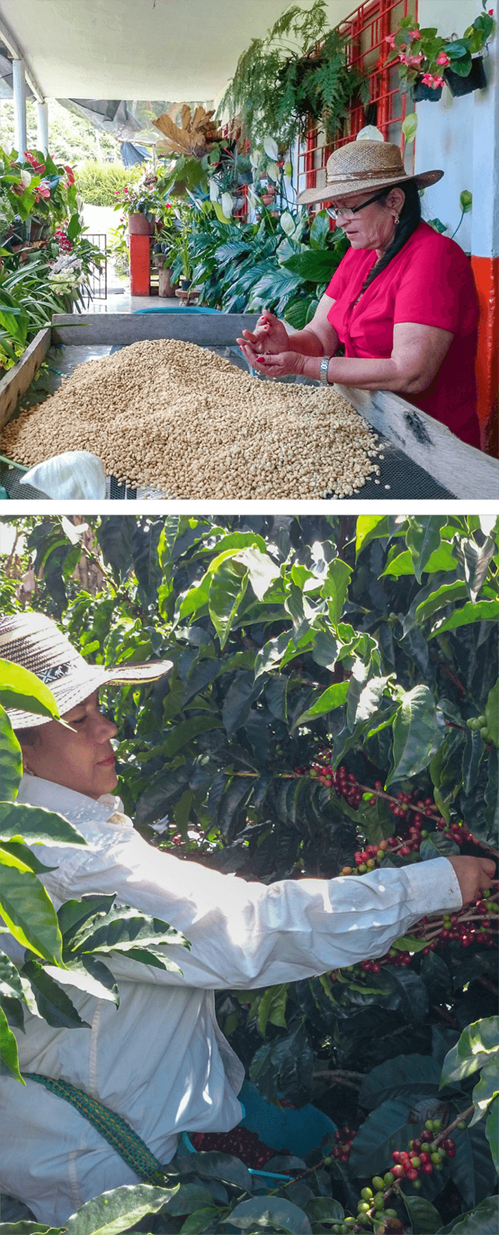 Balzacs Las Rosas Blend Coffee Farmers