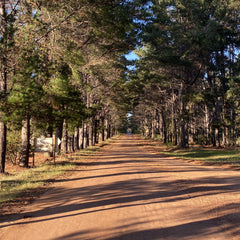 Red dirt country road with tall green trees