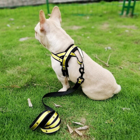 Training Adjustable Harness And Leash For French Bulldog