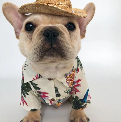 Summer Shirts For French Bulldog