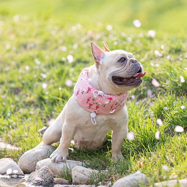 Cooling Collar for French Bulldogs