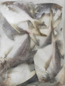 Frozen White Promfret Small 1Kg
