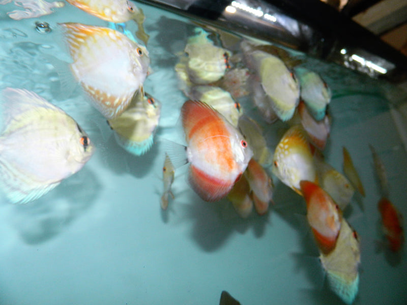 5 Pack Assorted Discus