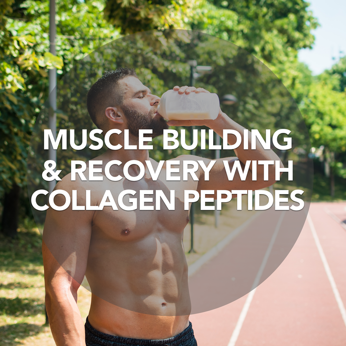Muscle Building and Recovery with Collagen Peptides