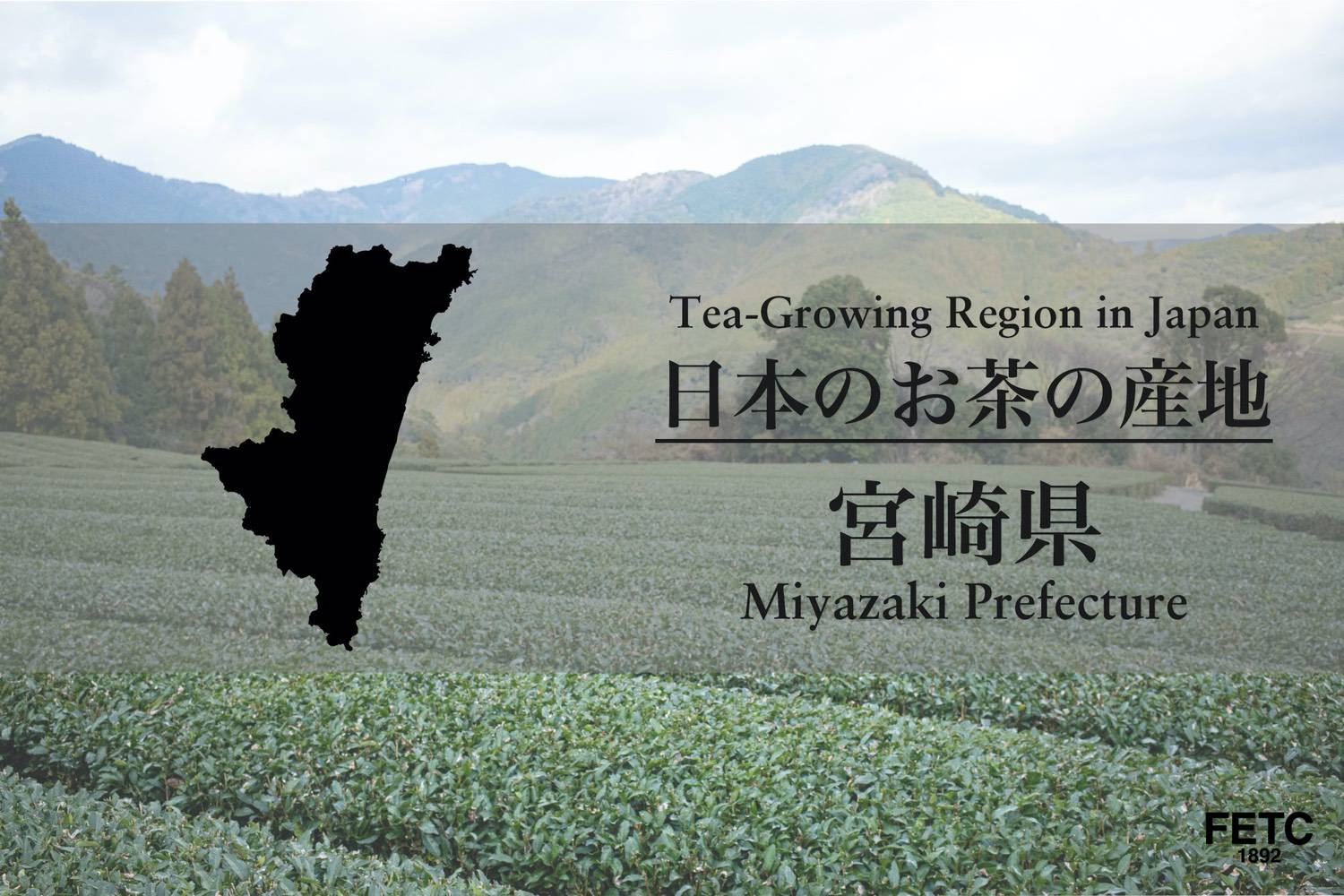 Tea-Growing Region In Japan | Miyazaki Prefecture