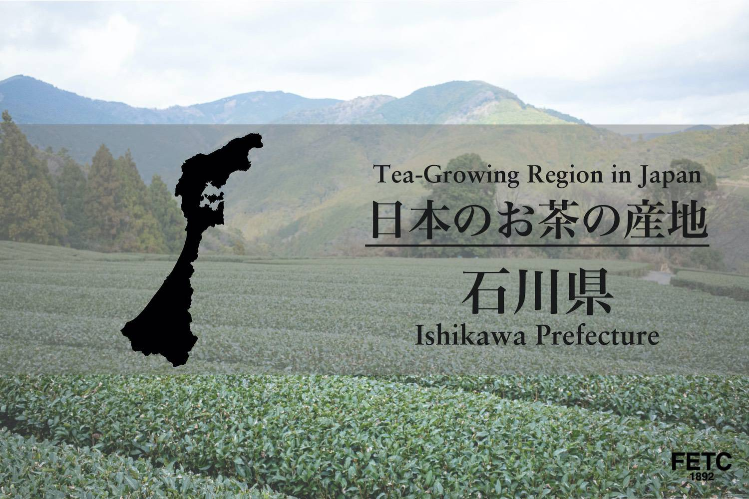 Tea-Growing Region in Japan | Ishikawa Prefecture