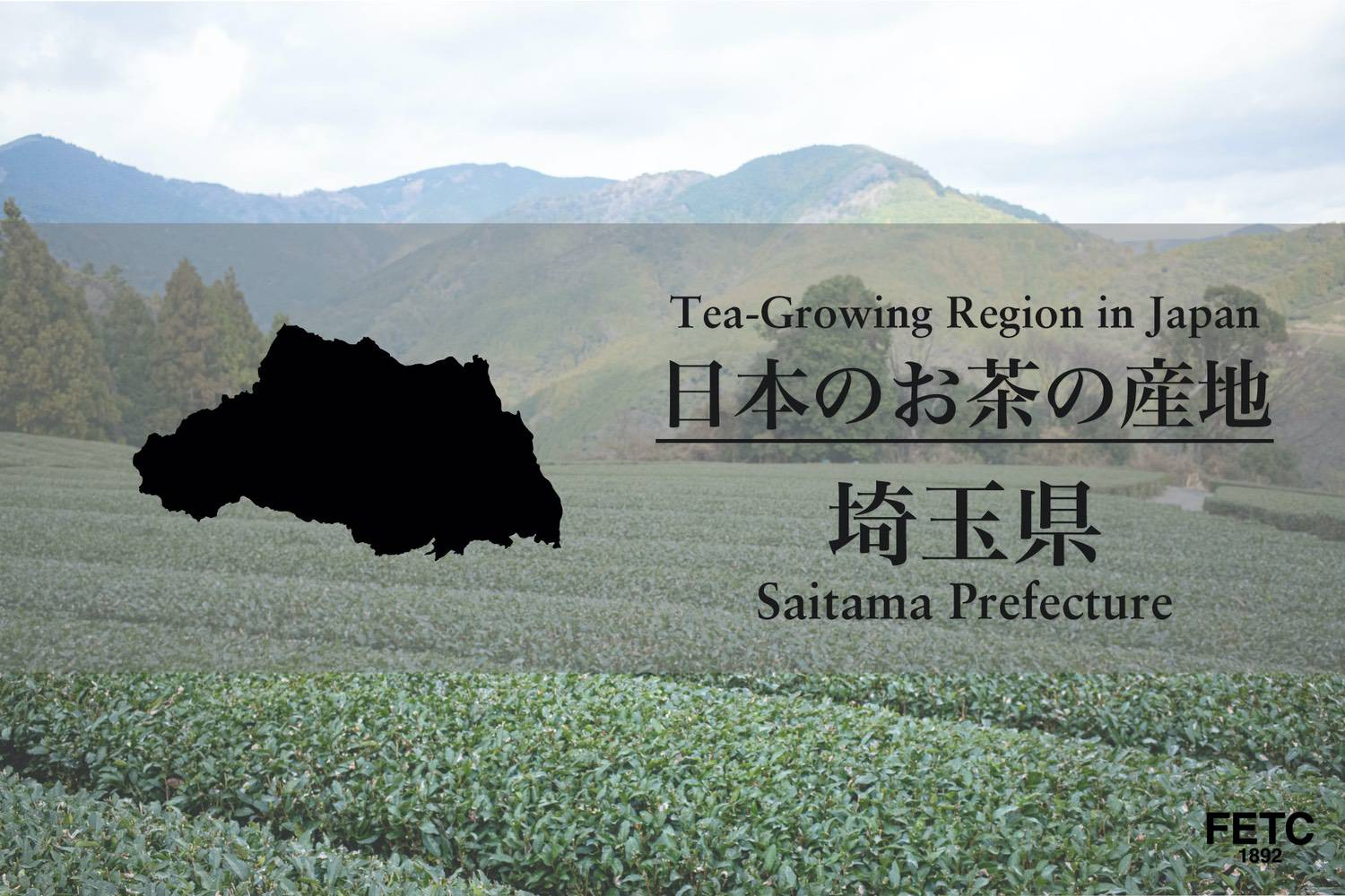 Tea-Growing Region In Japan | Saitama Prefecture