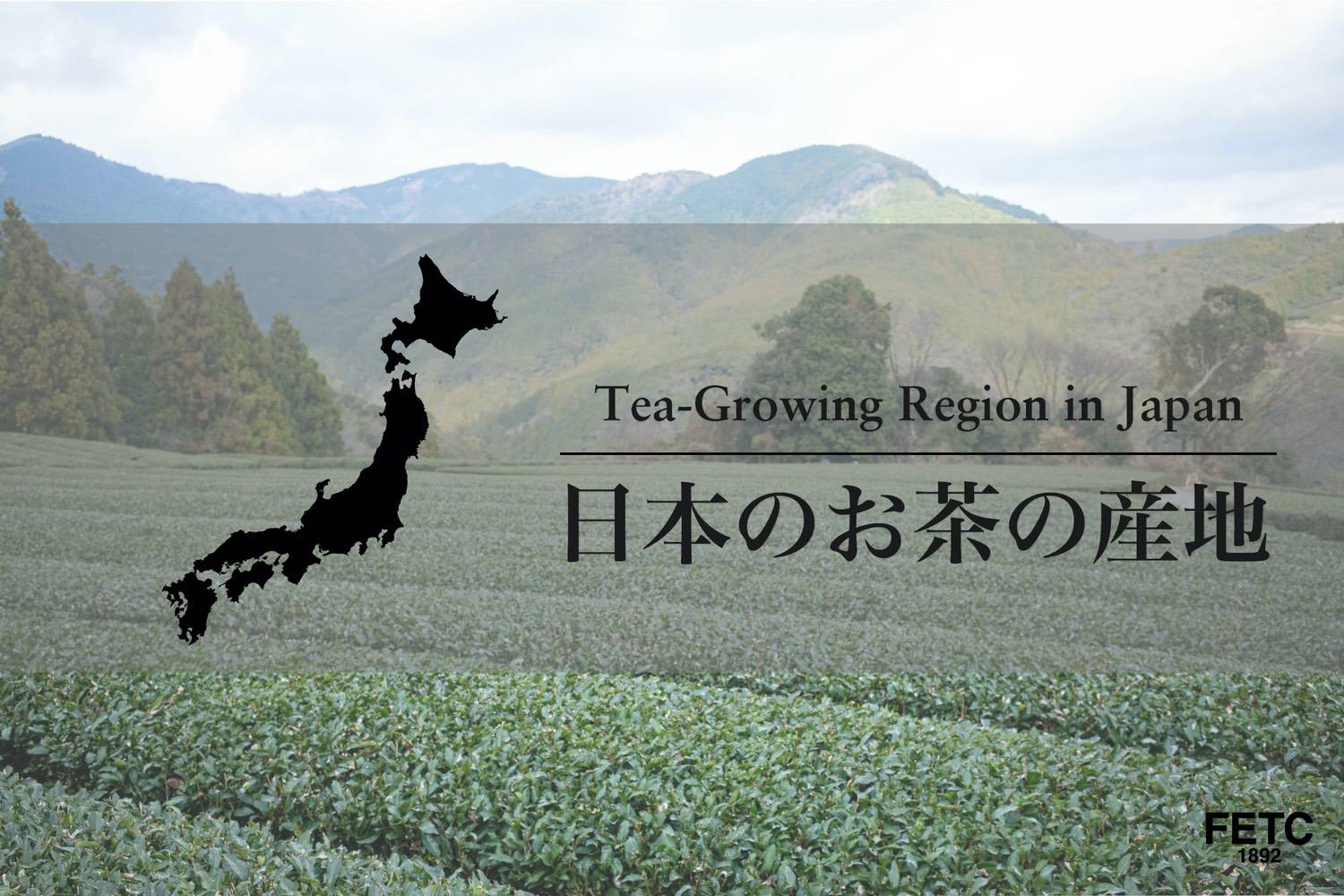 Tea-Growing Region in Japan