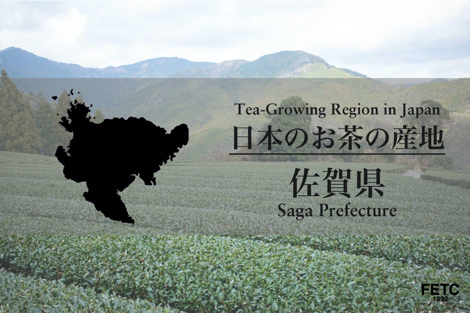 Tea-Growing Region In Japan | Saga Prefecture