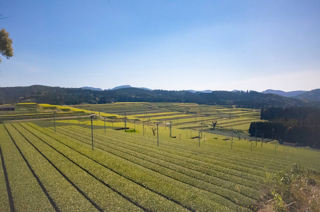 Large tea farm of Kagoshima Prefecture